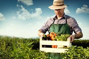 155500-425x283-Organic-Farm1