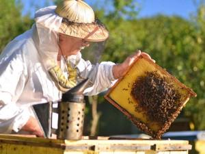 pčele3